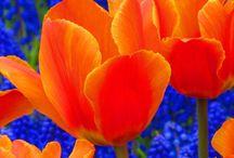 Orange / by Julie Oakes