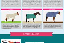 Horses 101 / Are you a new horse owner? Here's all the basic information you need to get started.