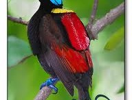 Beautiful Birds / by Irene Kennedy