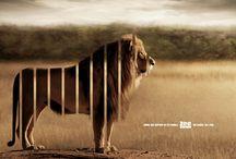 Zoo ads/design