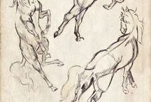 cavalli digni