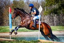 OTTB News / News from around the web about off-track Thoroughbreds.