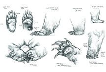 Анатомия животного