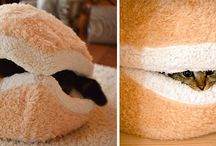 Awesome pet furniture designs