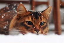 _aestethic/Achievement Cats