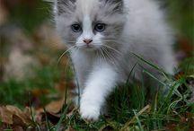 Cats•