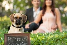 Dogs  / Why not let your dog be part of your special day!