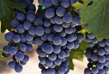 Şarap&Wine