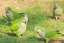 Parrots & other birds / by Mindy Bryde