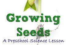 classroom: farm/ growing food/ farm animals