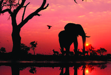 Sunrises of elephants