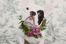 :: Animals in Weddings ::
