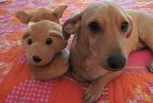 Dear Abby / My little Dachshund - Jack Russell Terrier mix dog has her own blog column weekly at http://www.birdhouse-books.com