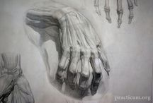 Hands&Arms anatomy