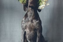 Dogs, Weddings & Flowers - Inspiration / dogs at weddings