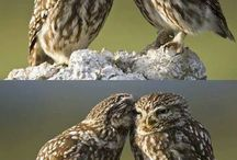 Owls / by Mary Sier