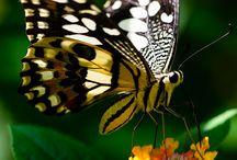Butterfly Love!!!