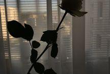 My photos