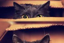 Cutie Patooties =^.^= / by Emily Benjamin