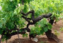 Croatian wine / We are preparing for you new website about food and wine in Croatia. Details quite soon.