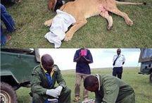 Amazing animal rescue