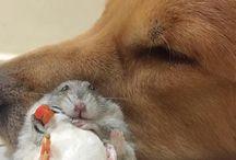 Pets / peace mate