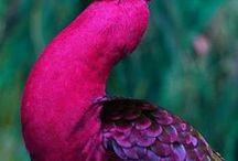 beautifull birds