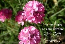 Pretty Perennials