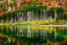 Trees & arvores