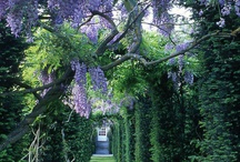 awesome gardens - hedging and topiary