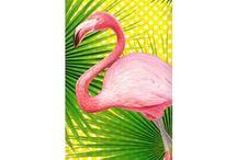 I love Flamingo / Flamingo  Flamant rose