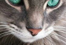 Cats with Mesmerizing Eyes