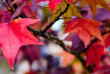 Autumn beauty / by Anne Carter