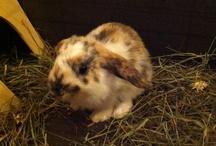 Peanut / Il mio piccolo coniglietto :)