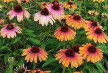 Terrasse blomster