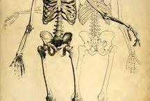 Skeletone