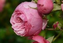 Post de Jardinería de Agronatur / Post sobre jardinería publicados en el blog de Agronatur Ingenieros