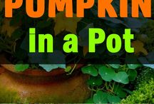 how to grow pumpkin in a pot