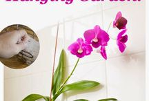 Orchid Inspirations diy & arrangements / Be inspired. Beautiful orchid inspirations from Do It Yourself projects to elegant centerpieces.