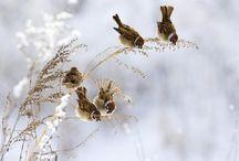 Sparrows / by Francesco~† Garzolini
