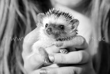 Millermeade Farm's Critter Connection ~ Upcoming Events and Road Trips / We are a reputable #breeder on the OH / MI / IN border, specializing in quality #hedgehogs.