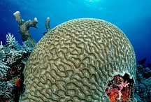 fish,coral etc 3