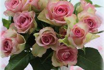 decor / rose fresh