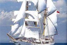 navires    navir