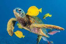 I ❤ turtles