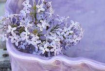 "P A N T O N E   V I O L E T  / ""Violet Tulip, a romantic, vintage purple, evokes wistful nostalgia."" Pantone 2014 Spring Colour Report."
