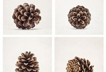 Moodboard: pinecone