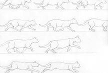Tutoriale pisici