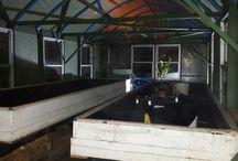 aquaponic setups