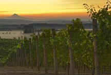 Fall in Love with the Willamette Valley